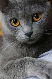russian cat names best 25 grey kitten names ideas on