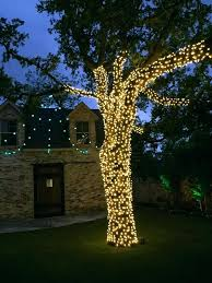 Tree Trunk Christmas Lights Wrapped Landscape Lighting Palm