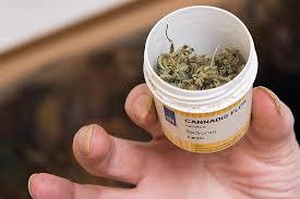 cannabis gibt es ab märz auf rezept