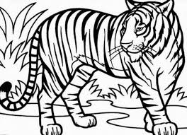 Spectacular Design Tiger Coloring Pages Of Baby Tigers