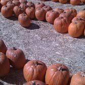 Pinery Bonita Pumpkin Patch by Pumpkin Station 41 Photos U0026 29 Reviews Theme Parks 5354