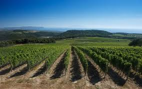 Private Bolgheri And Super Tuscans Wine Tasting Tour With