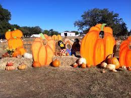 Best Pumpkin Patches Indianapolis by Pumpkin Patchin U0027 Texas The Daytripper