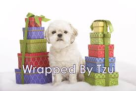 Wrapped By Tzu: Giftwrapping Fundraiser - NorthStar Shih Tzu Rescue Books Beer And Brisket As Barnes Noble Reopens In The Galleria Online Bookstore Nook Ebooks Music Movies Toys West Kendall Today Wkenlltoday Twitter What Is Biggest Shopping Mall America Stock Photos And Images Alamy Bloomington Local Map Of Also Located Minnesota This Edina Properties Hines Book Store
