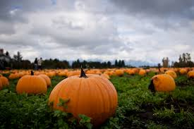 Colorado Springs Pumpkin Patch by 5 Things To Do In Colorado In October 2017 Vebo