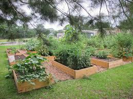 Charleston Daily Magnolia Park munity Garden