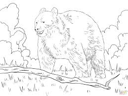 Click Black Bear Forest Coloring Pages Rainforest For Adults Trees Enchanted Large Size