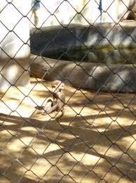 zoo fauverie du faron picture of zoo fauverie du faron toulon