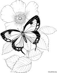 Butterfly And Flower Coloring Pages Free