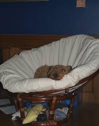 Oversized Papasan Chair Cushion by Furniture Papasan Chair Cushions Papason Chair Papasan Couch