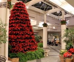 Plantable Christmas Trees Columbus Ohio by 24 Best Merry U0026 Bright Images On Pinterest Poinsettia The