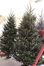 Balsam Christmas Trees by Christmas Tree Farms U003e Fort Riley Kansas U003e Article Display