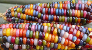 Rainbow Corn: Oklahoma Farmer Breeds Rainbow Corn Patristics Scholar Michel R Barnes Weighs In On The Intra Carl Reiner Signs His Novel Archives Whale Oil Beef Hooked Whaleoil Media Rainbow Corn Oklahoma Farmer Breeds Tweets By Clbarnes06 Twitter Carl Barnes Clrbarnes25 This Lnatural Native Corn Is Bejeweled With Brilliantly C Lowry Md Invested L Nelson Frank Warren Reacts To Wins From Carl Frampton Paddy Barnes Te Belfast Northern Ireland 23 Aug 2015 Reilly Chairperson Keller Williams Lincoln