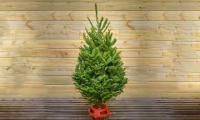 Fraser Fir Christmas Trees Delivered by Premium Christmas Tree Five Star Christmas Tree Co Groupon