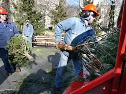 Christmas Tree Amazon Local by Recycle Christmas Trees For Free In Canton Icymi Canton Ga Patch