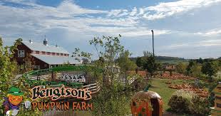 Bengtsons Pumpkin Patch Homer Glen Il by Bengtson U0027s Pumpkin Farm Home Facebook
