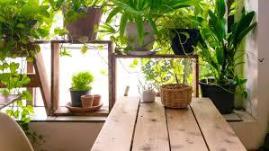 5 tipps wie ihr euer wohnzimmer in einen jungle verwandelt