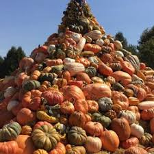 Best Pumpkin Patch Near Roseville Ca by Davis Ranch Llc 279 Photos U0026 84 Reviews Fruits U0026 Veggies