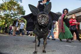 Tompkins Square Park Halloween Dog Parade 2017 by Tompkins Square Park Halloween Dog Parade 2012