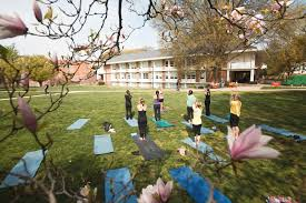 Students Participate In Outdoor Yoga Photo By Will Martinez