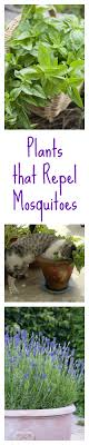 10 Plants And Herbs That Naturally Repel Mosquitoes | Bug Zapper ... 15 Backyard Tiki Torches Torches Citronella Oil And How To Get Rid Of Mosquitoes Mosquito Magnet The Best Ways To Of Naturally Beat The Bite Backyard Mosquitoes Research 6 Plants Keep Bugs Away Living Spaces Creepy 10 Herbs That Repel Bug Zapper Plant Lemongrass As A Natural Way Keep Away Pure 29 Best Images On Pinterest Weird Yet Effective Pest Hacks Thermacell Repellent Patio Lanternmr9w Home Depot 7 Easy Mquitos Dc Squad