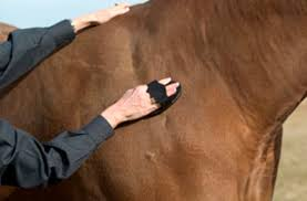 Shedding Blade For Horses by 15 Ways To Ease Winter Grooming The Horse Owner U0027s Resource