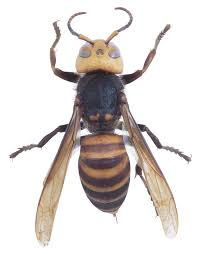 how to get rid of wasps in roof vents hunker