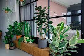 top 10 luftreinigende pflanzen für ein gesundes zuhause
