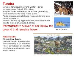 earth s terrestrial biomes ppt video online download