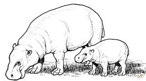 Click The Pygmy Hippopotamus Mother With Baby Coloring Pages