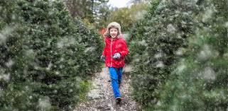Tannenbaum Christmas Tree Farm Michigan by Tannenbaum Farms