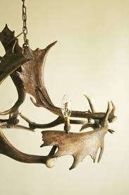 Moose Shed Antler Forums by 38 Best โคมไฟ เขากวาง Images On Pinterest Antler Art Deer Horns