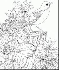 Stunning Flower Garden Coloring Pages With And Vegetable Printable