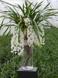 4 conseils d entretien pour l orchidée cymbidium le pouvoir des