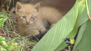 Pumpkin Patch Fresno Ca News by Nearly Two Dozen Animals Orphaned After Fatal Fresno Stabbing