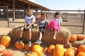 Flower Mound Pumpkin Patch Groupon by Preston Trail Farms 52 Photos U0026 20 Reviews Attraction Farms