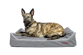 Chew Resistant Dog Bed by Chew Proof Dog Bed Why They Are Important