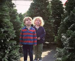Silver Tip Christmas Tree Los Angeles by Where To Find A Christmas Tree In Los Angeles