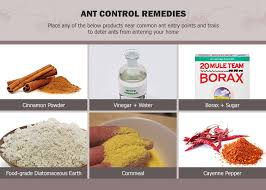6 Natural Ways to Get Rid of Ants using Safe Home Reme s