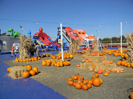 Uesugi Farms Pumpkin Patch by 吃货小分队 湾区最全南瓜田pumpkin Patch地图 周末来体验丰收季的美