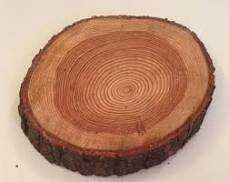 35 40cm Log Slices Wedding Table Centre Piece Rustic Cake Stand Natural Tree Blanks