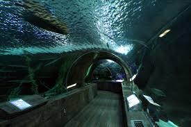 aquarium geant a visiter belgique aquarium geant a visiter belgique 28 images pairi daiza