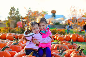 Pumpkin Farm In Palos Hills by Chicago Area Pumpkin Patches 40 To Choose From Chicago Tribune