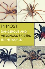 Do Tarantulas Shed Their Fangs by The World U0027s 14 Most Dangerous U0026 Venomous Spiders You Should Avoid