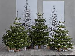 Best Smelling Christmas Tree Types by Christmas Christmas Best Smelling Trees Formasthe Tree Oil