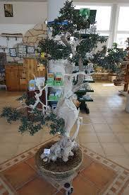bonsai olivenbaum ein stück kreta