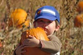 Pumpkin Patch Fort Collins by Pumpkins