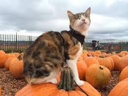 Pumpkin House Kenova Wv 2014 Schedule by Best 25 Pumpkin Patch Seattle Ideas On Pinterest Fall Season