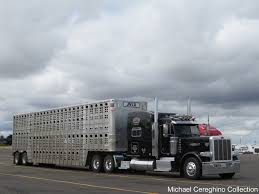 100 Martinez Trucking JVLX Livestock Peterbilt 389 J Transport Peterbi
