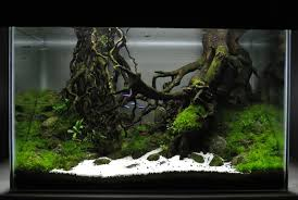 Aquatic Plant – AQUATICSFOREVERS 329 Best Aquascape Images On Pinterest Aquarium Ideas Floratic Visiting Paradise At Shah Alam Planted Aquarium Aquascape Things Aquariums Aquascaping Malaysia Diy Pertama Kali Aquascaping October 2010 Of The Month Ikebana Aquascaping World Sumida Aquarium Reloaded Fish Tanks And Designs Awesome A Moss Experiment Its All About Current Low Tech Tank Cuisine Wonderful Small Cubical Styles Planted The Surreal Submarine Amuse